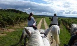 A cheval sur les chemins viticoles de l'appellation chinon les 2 et 3 septembre 2017