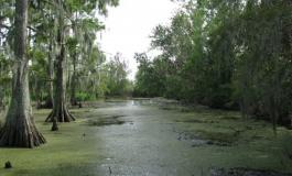 Sensations fortes dans le bayou !