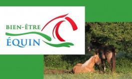 Les fondamentaux à connaître pour le bien-être de votre cheval