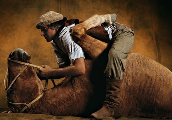 « Les plus beaux chevaux du monde » sont sur Campagnes TV