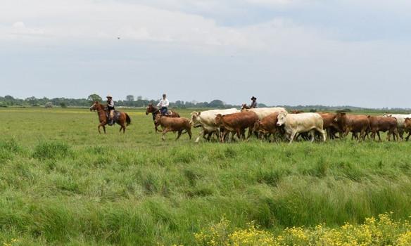 Stage Versatile Ranch Horse en Vendée