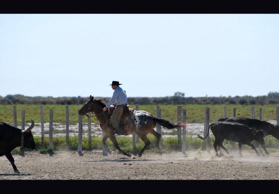 Antoine Cloux, Hank Moss… La Camargue est terre de cowboys le 14 juillet 2019