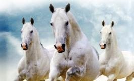 Quand la connaissance de soi passe par celle des chevaux ou le message de Linda Kohanov