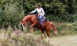 Finales du Challenge Versatile Ranch Horse de la RHA – Contigné (49) - 3 & 4 octobre 2015