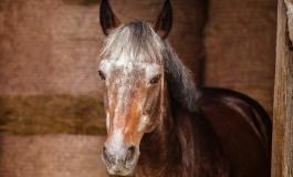 Un contrôle annoncé de votre centre équestre ou la préparation de votre vieux cheval à l'hiver : Un sujet vous concerne forcément parmi les prochaines webconférences de l'IFCE