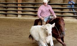 Tous à Mooslargue pour voir du TOP Reined Cow Horse