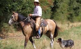 Clinic Eric Flachaire – Thomas Ranch - Contigné (49) - Dimanche 14 avril 2013