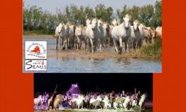 Rendez-vous du 6 au 9 août pour la Feria du Cheval 2020