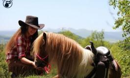 Les chevaux petits formats s'équipent western