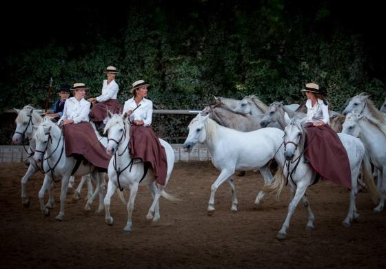 Le cheval au fil de l'histoire à Hennebont (Morbihan) le dimanche 17 septembre 2017