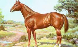 Histoire du Quarter Horse... Le meilleur cheval du monde