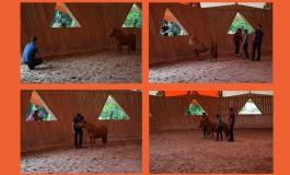 Découvrez « en vrai » le horse coaching à Lamballe le 28 octobre 2018