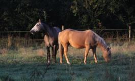 La protection sanitaire des chevaux passe par tous les détenteurs