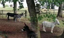 Les ânes ont la cote !