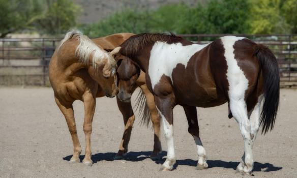 Prêter ou louer son cheval, que dit la loi ?