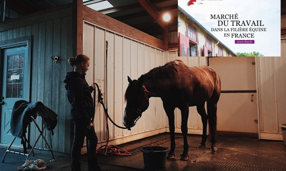 Bon à savoir pour faire carrière dans l'univers du cheval