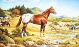 Histoire de l'Appaloosa: le cheval des Indiens et de ceux qui les aiment