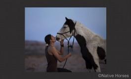 Tout le projet « Native Horses »