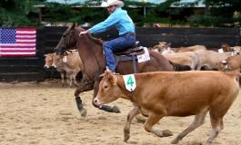 Championnat du Monde de team penning et de ranch sorting à Montarnaud (34)