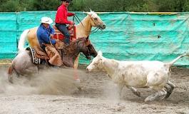 Versatile Ranch Horse (VRH) Cup au Petit Auverné (44) – 22/23 août 2015