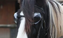 Comment protéger les yeux de son cheval