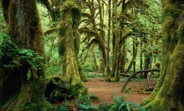 L'état de Washington ou la nature en version XXL