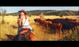Les bons plans de Randals Bison, de la terrine de bison au whisky pour le réveillon au spectacle du tri de bétail