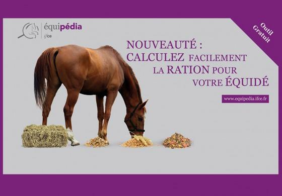 Comment calculer la bonne ration pour mon cheval