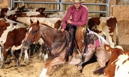 Remoray (25)- CCHA Golden Horse Stables - Les jeunes sont là