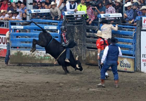 A St-Tite (Québec) : les cowboys s'illustrent en rodéo dès onze ans... Toutes les photos…