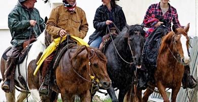 Travail du bétail : Concours AWA à Saint-Yrieix-la-Perche (87)