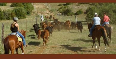 En décembre, on organise ses stages bétail du printemps… aux Randals