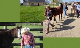 Stage spécial poulain au Thomas' Ranch (49)