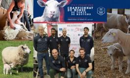 Message personnel pour les éleveurs de moutons !