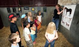 La France par la face cheval : halte en Vendée