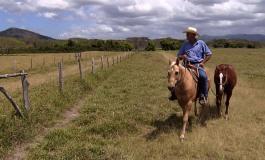 Le quarter horse sur les pistes texanes et néo-calédoniennes avec Equidia Life