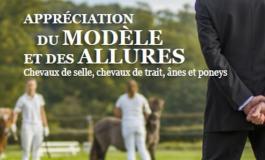 Un livre pour se former l'œil et décrire justement les chevaux