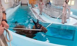 Rééducation du cheval : le top en Normandie